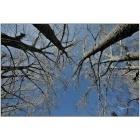 Forêt de branches-101912