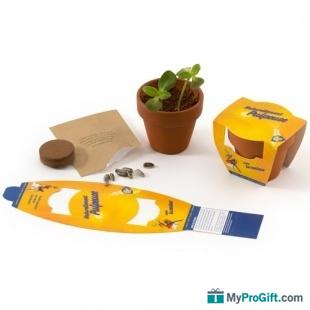 Graines en mini pot de terre -102066