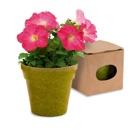 Pot de fleurs-102411